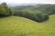 Newton Wood and Duryardwood Brook valley