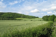 Farmland and forest below Roundway Hill