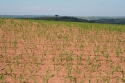 Washfield: arable land