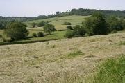 Awliscombe: near Pomhayes Farm