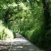 Tiverton: Ducksmoor Plantations
