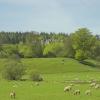 Farmland Near Drumlanrig Castle, Dumfriesshire