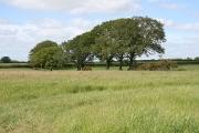 Cruwys Morchard: east of Stubborn Cross