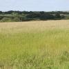 Cruwys Morchard: near Kelly
