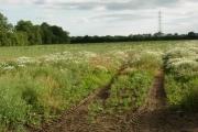Farmland south of Ansty