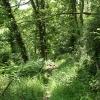 Tiverton: CrossÂ's Wood