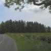 Trees near Stockbridge