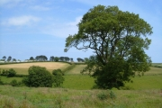View near Cotton
