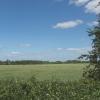 Wheat field, near Wheatley