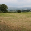Grass Field and View