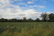 Plumton Wood, Whepstead