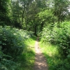 Footpath and Cycle track between Duncanwood Lodge and Kingstand Lodge