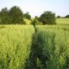 Dane End: Bridleway to Whitehill Farm