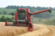 Cullompton: harvesting at Colebrook