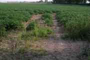 Farmland around Heath Farm, Catfield