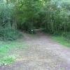 Wassell Wood