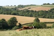 Hittisleigh: near Swallowtree