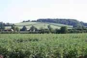 Potato Field near Pool Head