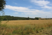 View across wheat field to corner of Docksight Wood