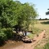Hillside field, with stream.