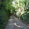Sunken road, near Pentre Halkyn.