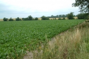 Farmland, north of Ashwell