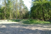 Farway Wood