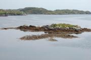 Seals in Loch Fionnsabhagh