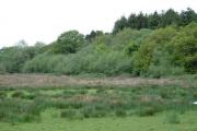 Woodland near Hafodheulog