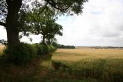 View towards Sotby Plantation