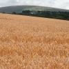 South Tawton: towards Cosdon Hill