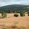 Sampford Courtenay: towards Cosdon Hill