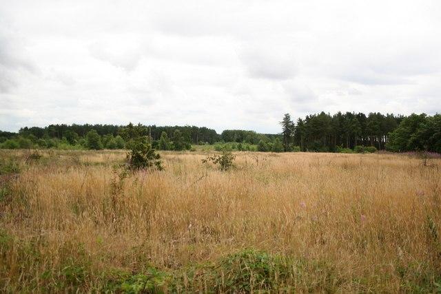 Cop Hills Wood