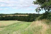 Sampford Courtenay: near Wood