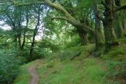 Footpath through woodland near Cowsic River