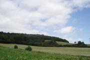 Shipley Brake and George's Hill Plantation