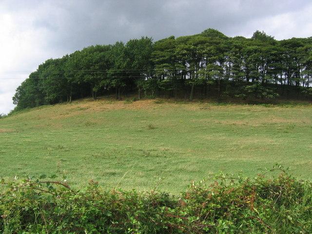 Trees on a Hilltop - Alderwasley
