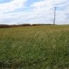 Grassland near Cuckoo Wood