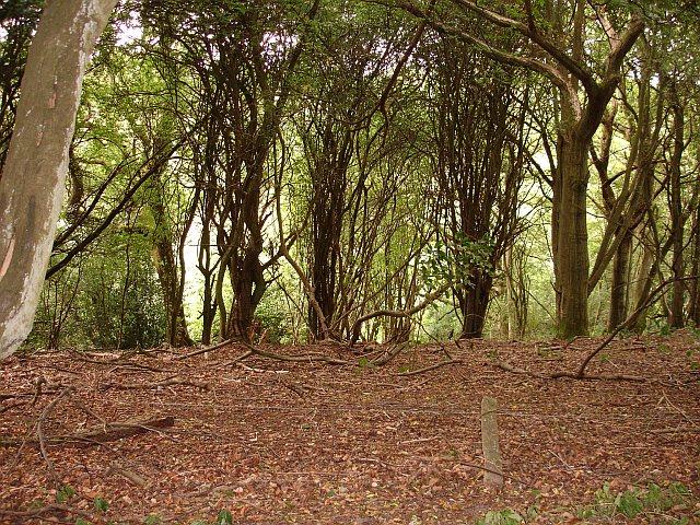 Wooded hillside off Thorneycroft Road