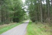 Woodland near Easter Balcroy
