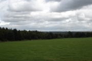 Big Wood near Hartwood, N Lanarkshire