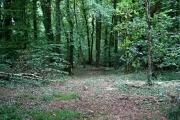 Langunnett Wood