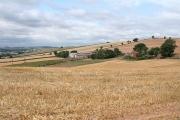 Shobrooke: towards Bradley Farm