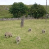 Standing stone and sheep