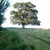 Tree just above Pontypool Park