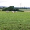 Sheep huddled together, near Oakenholt
