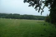 Farmland near Ettrick Water