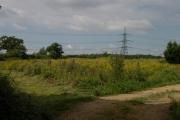 Farmland, Honey burge