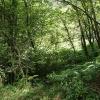 Stockland: woodland near Lower Brimpitt