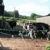Yarcombe: Broadley Farm